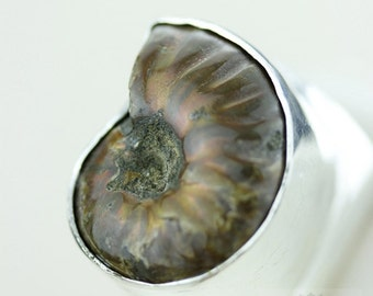 Size 8 ALBERTA AMMONITE Fossil HEAVY Set (Nickel Free) 925 Fine S0LID Sterling Silver Ring & Free Worldwide Express Shipping r1530