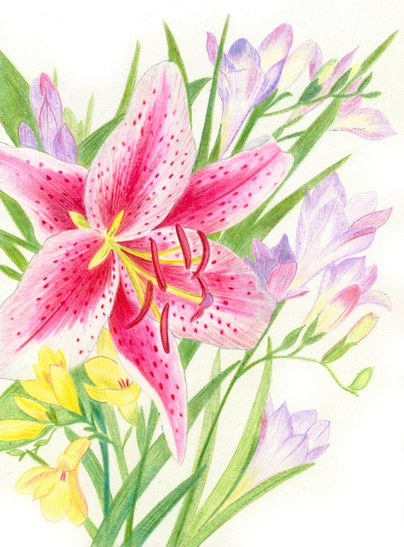 Drawings Color Pencil Nature
