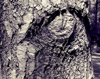 Nature Photography - Tree Photography - Botanical Print - Forest Photography - Eye