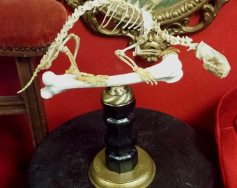 Wonderful Articulated Polecat Skeleton Mounted On A Bone