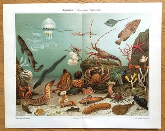 1894 AQUARIUM SEA LIFE print original antique ocean underwater color sealife lithograph