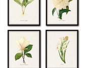 Redoute White Botanicals Print Set No. 1 - Giclee Canvas Art Prints - Antique Botanical Prints - Wall Art - Prints - Posters - White Flowers