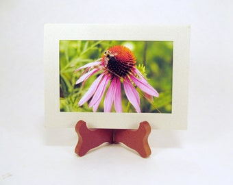 Bee on a Cone Flower, Blank Photo Card and Envelope, Note Card, FI0098