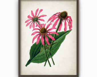 Antique Botanical Flowers Art Print - Vintage Botanical Home Decor - Antique Flower Book Plate Illustration - Flower Art Poster (AB268)
