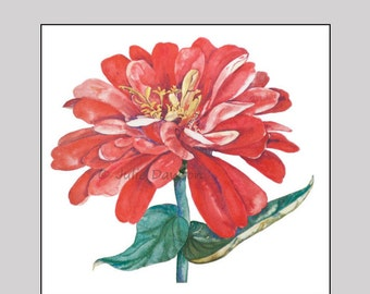 Flash Dance - Print of a bold red Zinnia, which represents thoughts of absent friends