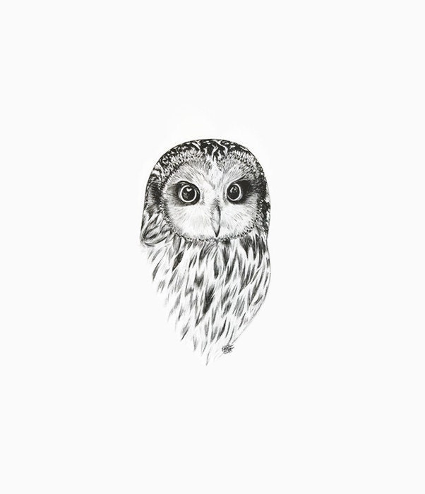Owl Black And White Dr...