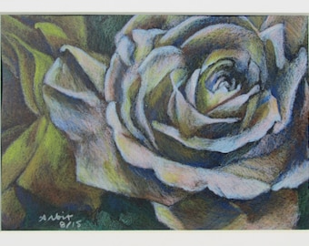"""White Rose - 5""""x7"""" Colored Pencil Drawing"""