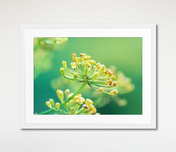 Fennel Flower Print, Wall Art Framed, Macro Photography, Nature Decor, Floral Picture
