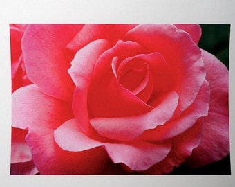 Pink Rose Photograph, Macro Rose Photo by Artist, Fine Art photography, Floral Wall Room Decor