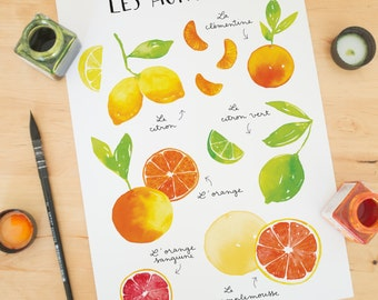 Fruit art print, Fruit wall art, fruit print, fruit poster, citrus fruits, kitchen wall art, kitchen decor, fruit decor, Kitchen art