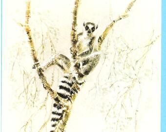 Ring Tailed Lemur print