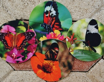 Varied Butterflies Coaster
