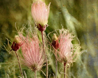 Three Wispy Flowers, Fine Art Photography