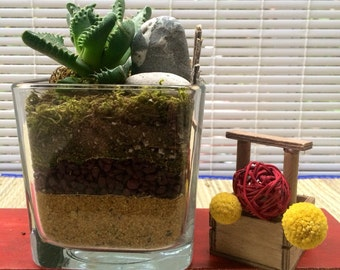 Layered Succulent Glass Planter/ gift/ man gift/ birthday/ plants will vary size 4x4