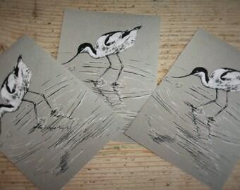 Avocet Postcards, Bird Print Postcards