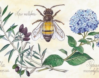 Home decor, Illustration, Scientific illustration, Wall art, Honey Bee