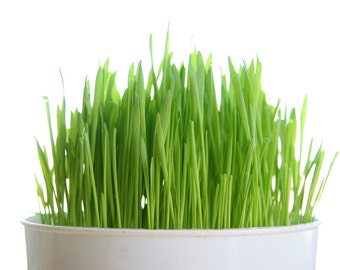 Wheatgrass and Catgrass Seeds, One Pound, Grow Your Own Wheatgrass At Home, Nutritional Body Cleansing Wheatgrass, Hand Packaged NON-GMO