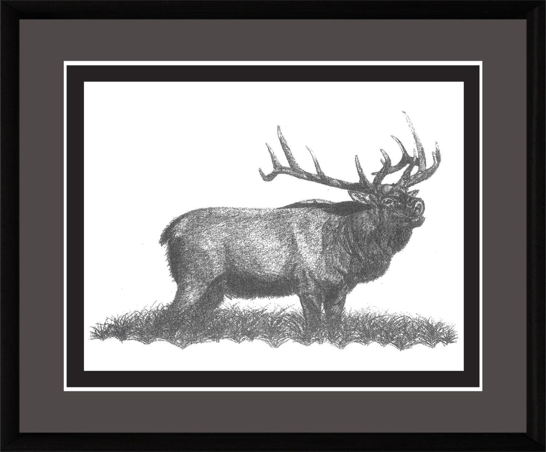 Pencil Drawing Rocky Mountain Elk Bull Elk Bugling Elk