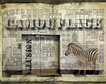 Zebra Going Incognito