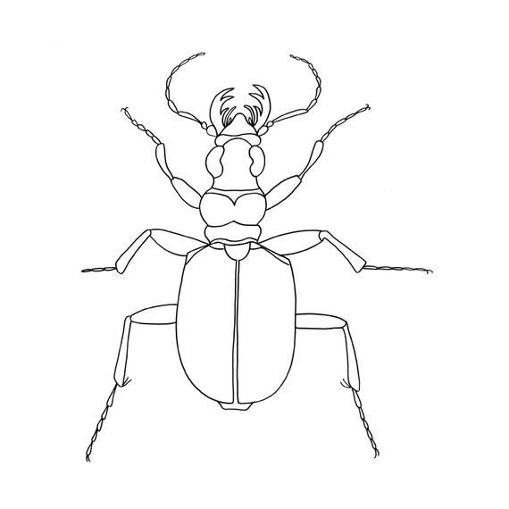 Line Art Etsy : Items similar to line drawing beetle art fine print