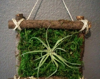 Handmade air plant branch frame