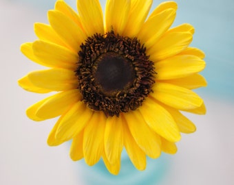 Made to Order - Sunflower Hair Flower