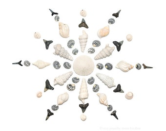 Seashell Snowflake 3 (8x10 photograph) seashells, shell art, shark teeth, beach art