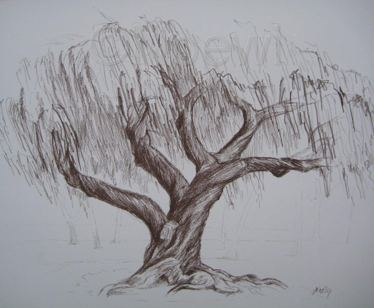 Tordu dessin arbre original par noewi croquis nature paysage - Croquis arbre ...