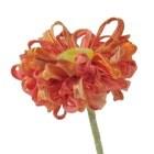 ffflowers