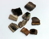 Petrified Wood Beads Hand-Cut Flat Freeform 9 pcs