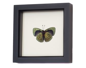 Butterfly Home Decor Charles Darwin science art display
