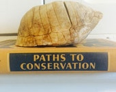 Vintage Box Turtle Shell in Natural State