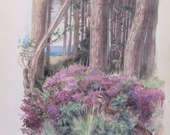 1970s Botanical Print of 1906 Edith Holden Water Color, AUGUST, Unframed Nature Print