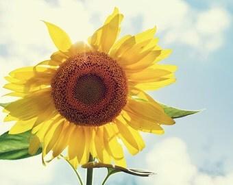 Sunflower photography, flower art, floral fine art print, yellow summer flower decor
