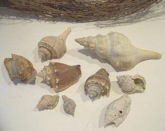 Seashell Collection Nautical Conch Shell Home Decor
