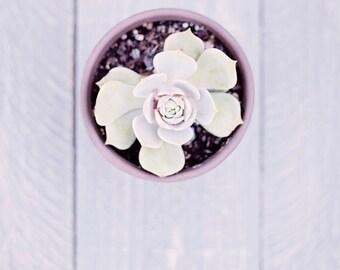 succulent art bedroom decor pastel wall art nature botanical photography mint green lavender fine art photograph kitchen wall decor