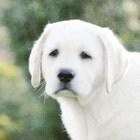 estatehound