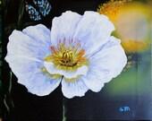 Iceland Poppy Painting, Original Art, 11 x 14 White Poppy Painting, Contemporary Painting
