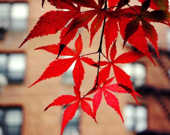 Maple Tree on a Rainy Day, New York City Photography Print, Queens NYC Photo, Nature Photography