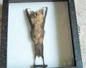 Sleeping Teddy Bear Bat in Glass Top Case - SHIP FREE