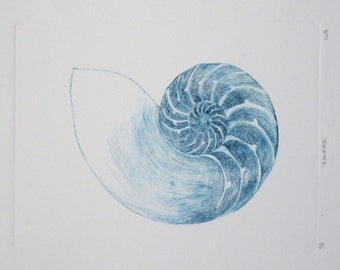 Nautilus chambered shell original drypoint etching sea shell ocean print