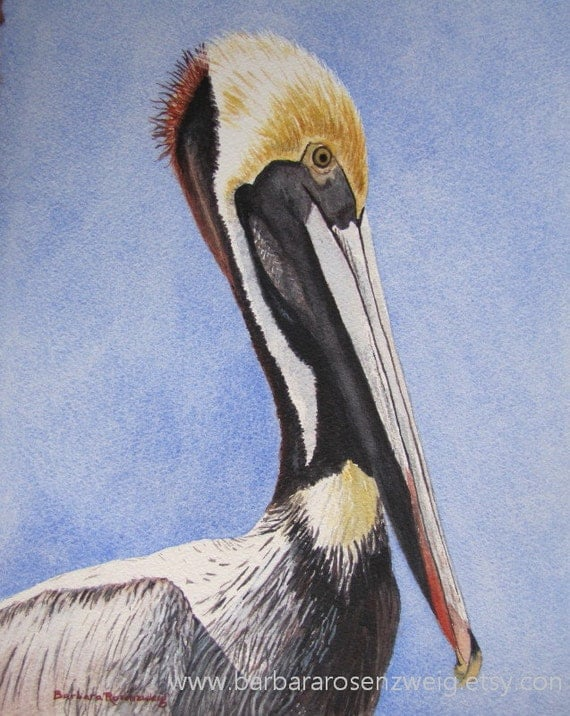 Pelican Bird Print Nautical Home Decor Pelican Wall Art