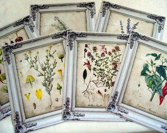 Set of 6 Botanical Card Toppers/Mini Posters - 16cm x 13cm