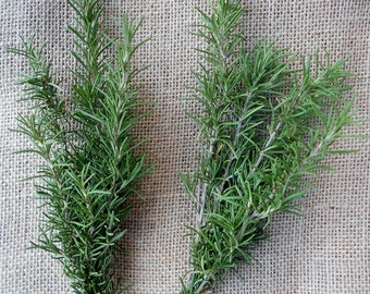 Organic Fresh Rosemary Cuttings Sprigs Recipes Drying Herbs Aromatic Wedding