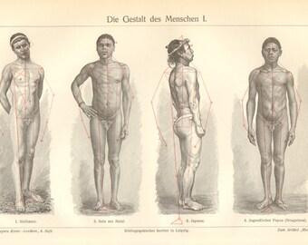 1903 Human Body Shapes - Males Original Antique Engraving
