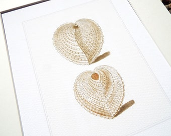 White Heart Sea Shell Study 7 Archival Print on Watercolor Paper
