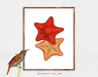 RED STARFISH - Instant Download Digital Image - printable antique sea life illustration for framing, totes, tags etc. - home & cabin decor