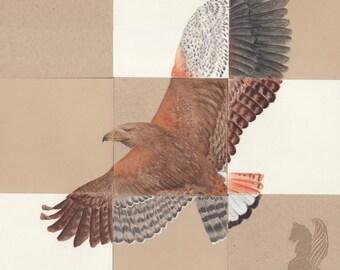 Pieces: Hawks - Original Colored Pencil