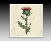 Thistle Wildflower Ceramic Art Decorative Wall Tile or Coaster