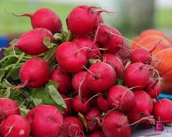 Radishes (FREE shipping in the U.S. only)